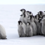 何でも肯定してくれる皇帝ペンギンの赤ちゃん、コウペンちゃんとは?