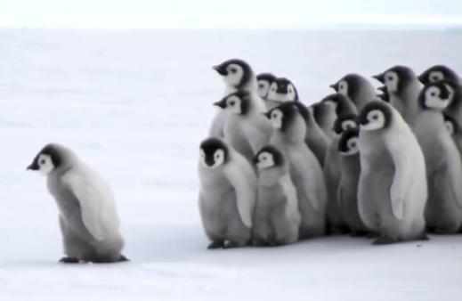 penguin-baby